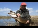 Глухой-щука  рыбалка Aleksandrs Romanovs (Latvia-Латвия)