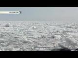 В Сети появилось первое видео с косатками, которых зажало во льдах на Сахалине