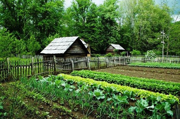 Дача сад огород липовый остров