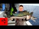 Вот это Рыбалка Приколы на рыбалке 2016 Лучшая Подборка Приколов