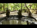 Обезьяны прыгают в воду крутят сальто monkeys jumping to water