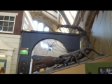 Гигантский скорпион.