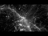 The Network Behind the  Cosmic Web