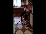 Irish dad gives son instructions on how to turn on the hoover...