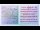 Оздоровление лимфатической системы. Stimulate Normal Lymph System Function.
