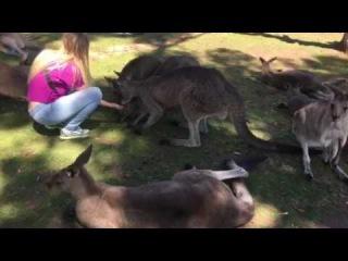Me in the land of kangaroo :)