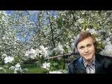 Яблони в цвету - Евгений Мартынов караоке