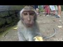 СМЕШНОЕ видео ПРО ЖИВОТНЫХ, уморительные животные, Подборка приколов с животным...