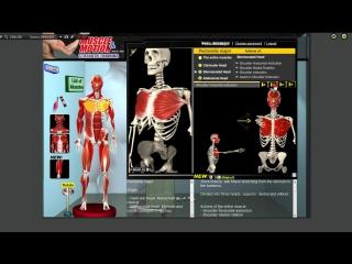 Большая грудная мышца. Грудь. Анатомия. Упражнения. Растягивание