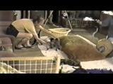 Смешные кошки_часть_16 (Как пугаются коты)