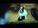 Французский бульдог снялся в рекламе Audi