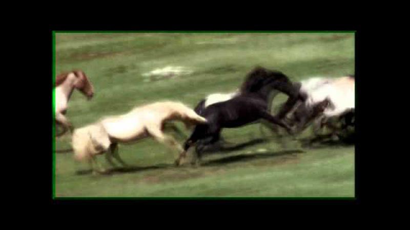Далеко, далеко ускакала молодая лошадь