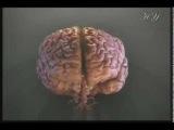 Чудо нервной системы человека