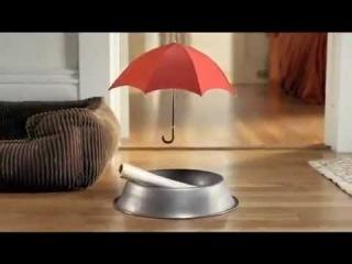 Смешная реклама страховой компании Travelers (кость)
