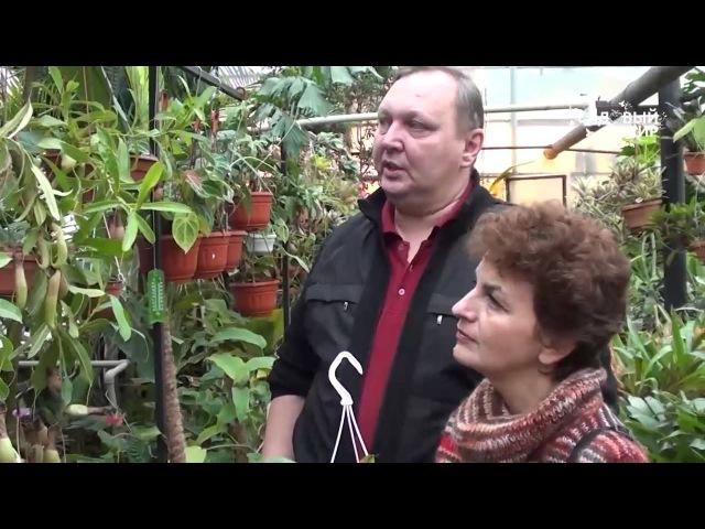 НЕПЕНТЕС Растения хищники дома