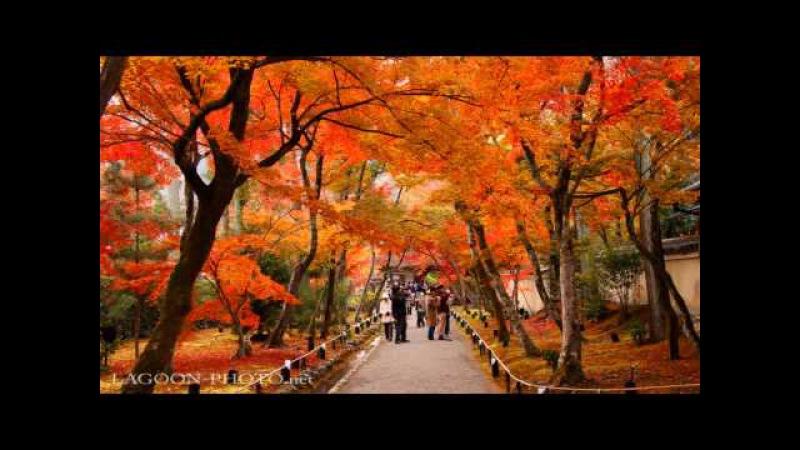 京都秋艶 autumn colors momiji leaves in Kyoto Japan 紅葉