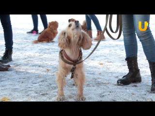 В Салавате прошли соревнования среди собаководов по общему курсу дрессировки