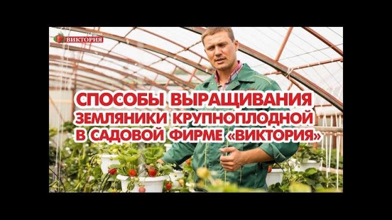 Способы выращивания земляники крупноплодной в Садовой фирме Виктория
