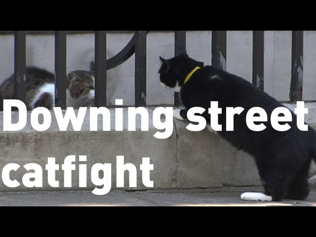 Downing Street cats Larry and Palmerston get in another fight