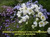 Посмотрите, какие красивые цветники своими руками могут получиться из почвопокровных растений