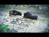 Bulls Clash | Paradise Vine #86