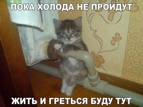 https://pp.vk.me/c627118/v627118308/39dc4/bKcfGHt_7F8.jpg