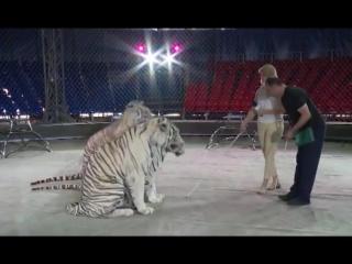 В Пензе журналистка телеканала «Экспресс» побывала в клетке с тиграми