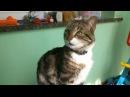 Мой котюк