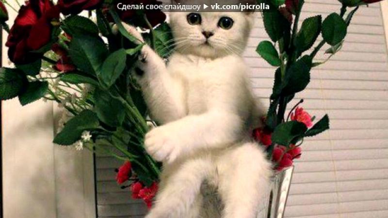 «• Открытки vk.com/fotomimi» под музыку Финская песня про котят - Дорожка 4. Picrolla