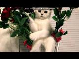 Открытки vk.comfotomimi под музыку Финская песня про котят - Дорожка 4. Picrolla