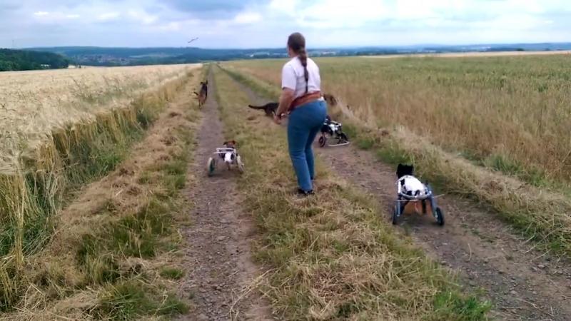 Cachorros Deficientes Brincando. Emocionante