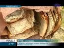 На Прикарпатті лісівники знайшли криївку