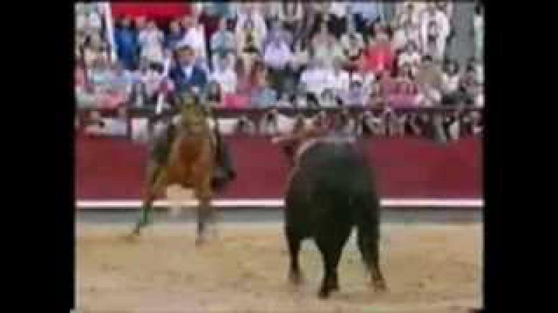 Лошади Что делает эта лошадь Вау Лошадь vs бык