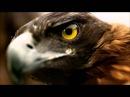 Армин ван Бюрен Новый клип 2012  Смотреть 720р