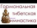 Тибетская гормональная гимнастика для оздоровления Тибетская гормональная гимнастика видео