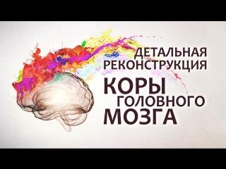Детальная реконструкция коры головного мозга
