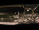 Беовульф / Беовульф: Возвращение в Шилдлендс (1 сезон: 9 серия) / Beowulf: Return to the Shieldlands (2016) Jaskier