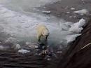 Белый медведь и русская подводная лодка polar bear and Russian Submarine