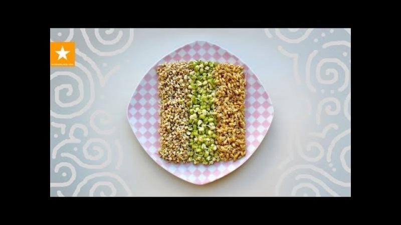 Как проращивать зерна. Очень детальная инструкция от Мармеладной Лисицы. WHEAT GERM » Freewka.com - Смотреть онлайн в хорощем качестве