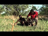 Хищники-убийцы Африки.Документальный фильм.Серия 2 | Ard