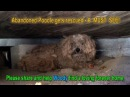 When the dog's owner died he was left behind Watch what happens next Please share