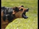 Питбуль загрыз напавшую на него бродячую собаку. Запорожье.