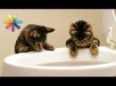 Как приучить кота к унитазу – Все буде добре. Выпуск 690 от 20.10.15