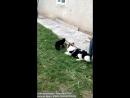 Крававий напад кота на пса)