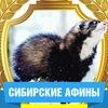 """Хорьки  из  """"Сибирских Афин"""" и клуб """"Лас-Грызас"""""""