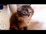 ТОП 10- СМЕШНЫЕ КОШКИ -- ЛУЧШАЯ подборка СМЕШНЫХ видео с КОШКАМИ