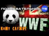 Кому служит WWF (Познавательное ТВ, Артём Войтенков)