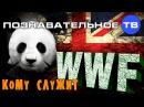 Кому служит WWF Познавательное ТВ, Артём Войтенков