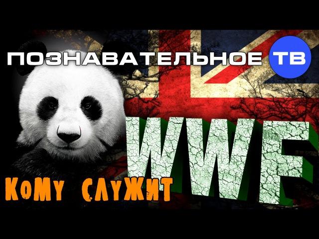Кому служит WWF? (Познавательное ТВ, Артём Войтенков)