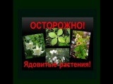 25 смертельно ядовитых комнатных растений